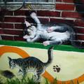 (05)雲林頂溪社區-屋頂上的貓