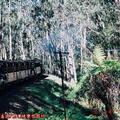(265)墨爾本-丹頓農區古董蒸汽火車