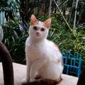 這是俺家室外喵的新成員,她的名字就是叫做「貓」.....