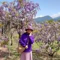 在還未前往足利花園紫藤花前 先來盤前菜吧!