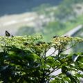 花樹上的昆蟲