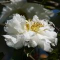 十一至十二月的花