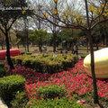 2015台南百花季-水萍塭公園 - 30