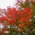 秋遊蛟河紅葉谷