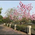 朝馬國民運動中心。風鈴木
