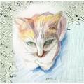 每天畫一隻貓,安息日除外~