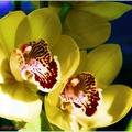 Etude---Flowers I