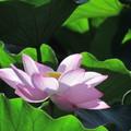 走到下風處  只為攬入一股 沁人心肺的清香。 每一瓣花瓣 每一朵花朵 值得細心玩味靜賞!