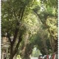 富錦街行腳