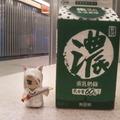 2019銀狐銀小狐