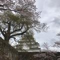 百選溫泉飯店、芝櫻、紫藤、新潟、佐渡島